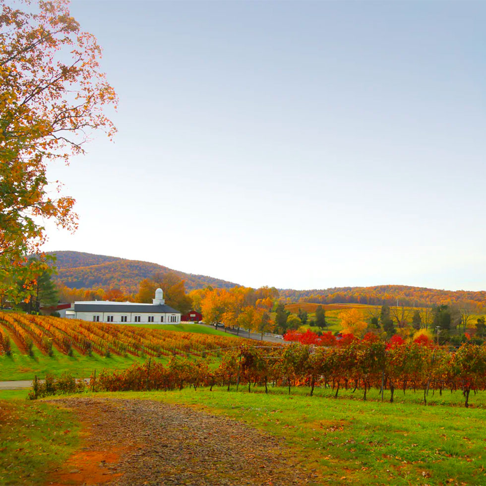 The Best Wine Vacations For Vino Lovers Looking To Get Away